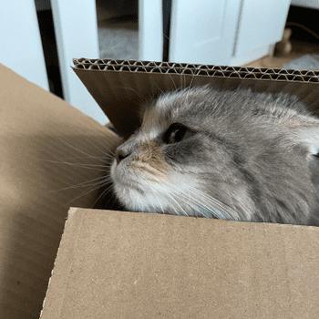 Katzen_Attacke