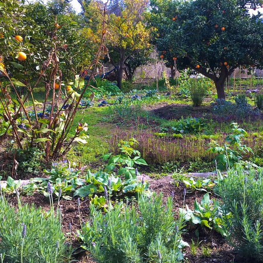 Grow a Food Forest