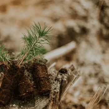 Tree Planters