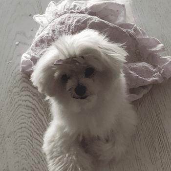 Chloe Advani 2
