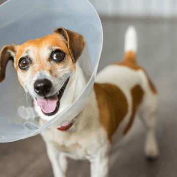 CABO PET HOSPITAL - Veterinarians & Animal Hospitals in Los Cabos
