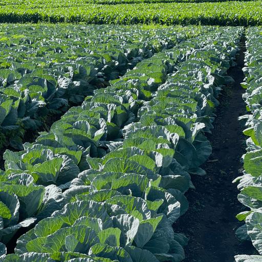 Farming & Agriculture