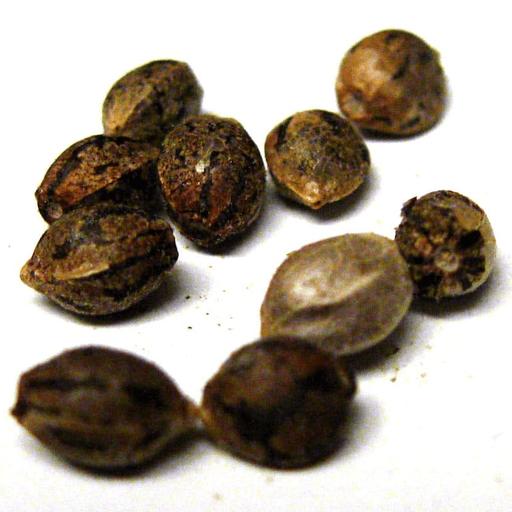Best seeds